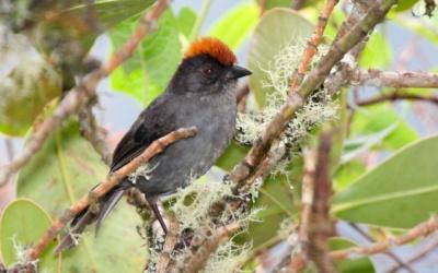 Bird Watching with Machupicchu 6D/5N